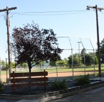Baseball Diamond Beside a Shady Bench