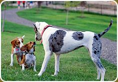 Two Smaller Dogs Stare up at a Large Dog