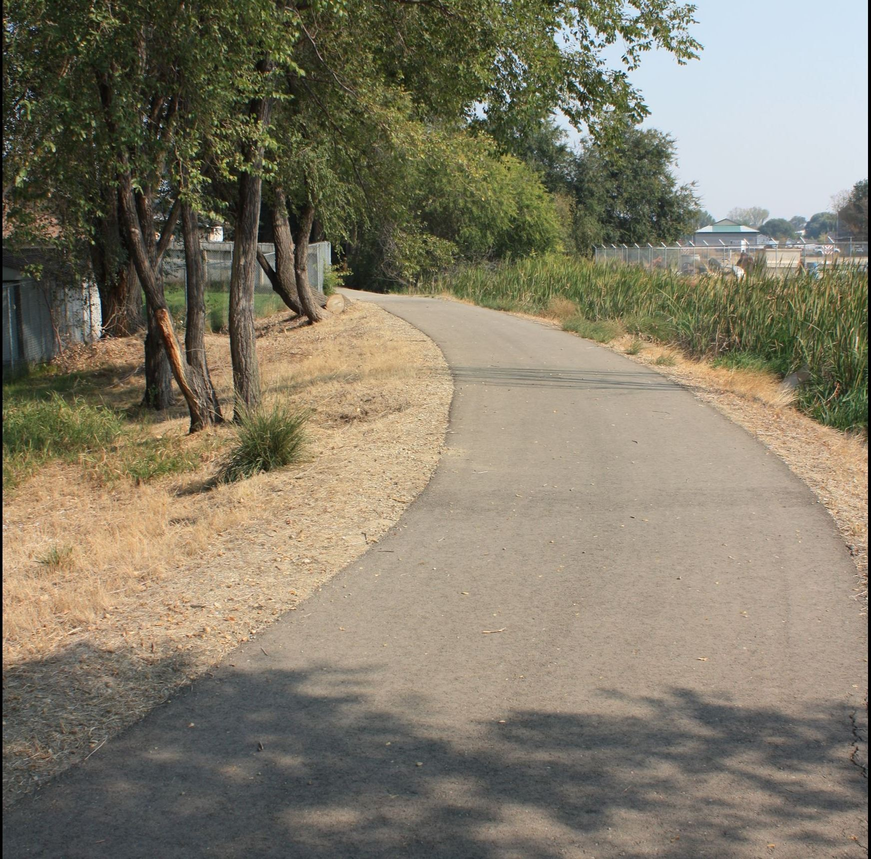 Paved pathway with trees on one side and tall grass on the other.