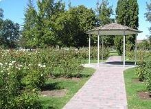 Small Gazebo in the Middle of a Rose Garden